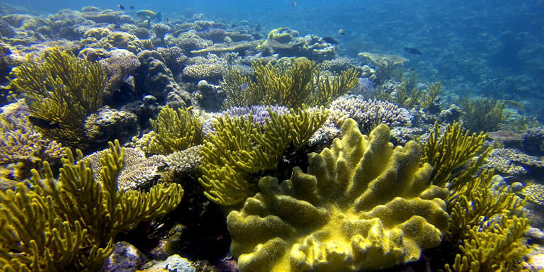 The Coral Triangle is considered as the global center of tropical marine diversity, supporting the highest number of coral species and fish. Photo credit: ADB.
