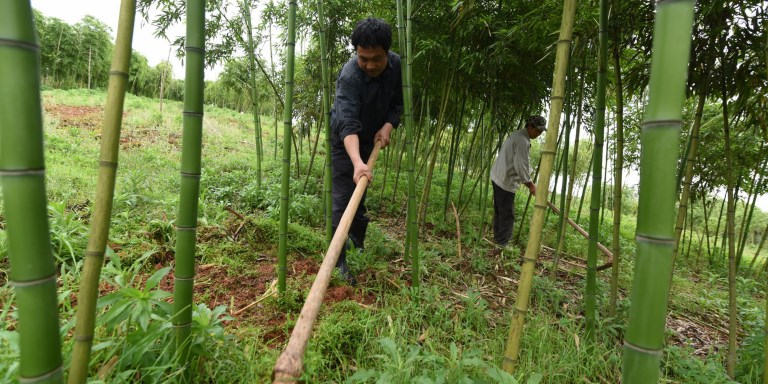 Local communities can help preserve the benefits provided by ecosystems, such as food and water production, carbon storage, and flood control. Photo credit: ADB.