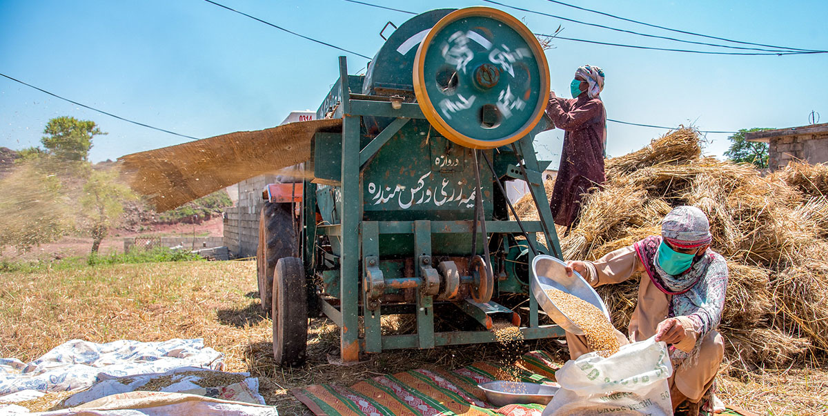 Agriculture is one sector that CAREC countries like Pakistan can explore to push an export-driven growth.  Photo credit: ADB