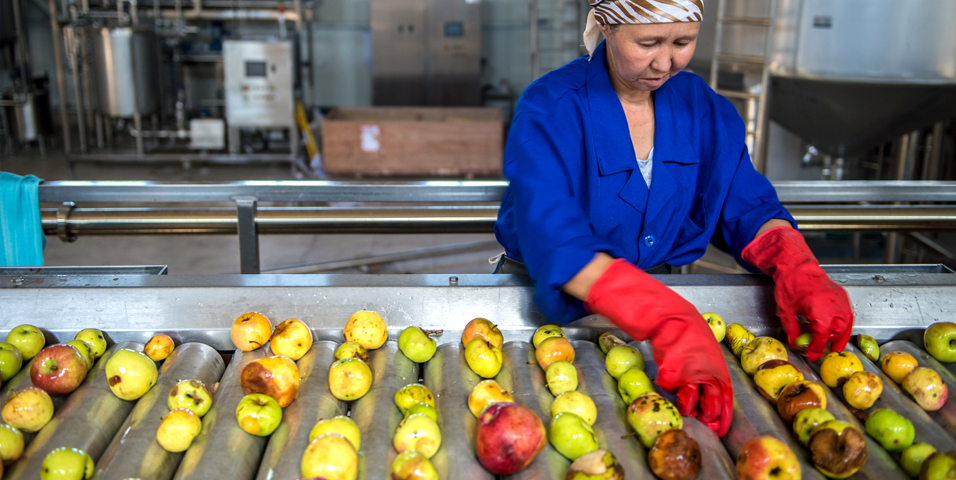 A factory worker in Almaty checks apples for quality. Photo credit: ADB.