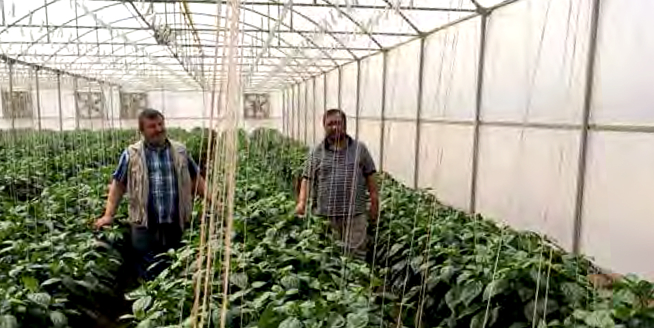 In Sudan, the Abu Halimah Greenhouse Project used the group value chain approach to support small agribusinesses. Photo credit: Islamic Development Bank.