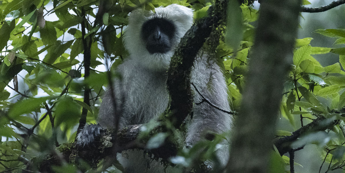 Further encroachment into forests with high biodiversity will increase the risk of contacts with zoonotic pathogens and a potential spillover into areas where humans and domestic animals mingle. Photo credit: F. Ricciardi.