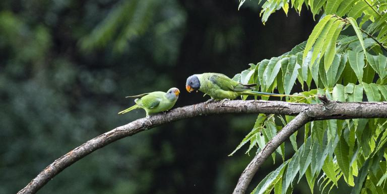 Thousands of undiscovered viral species of mammals and birds have the capacity to transmit diseases to humans. Photo credit: F. Ricciardi.