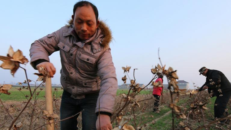 In the People's Republic of China, an eco-compensation scheme helped boost farmers' income while protecting the environment. Photo credit: ADB.