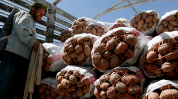 With the new storage facilities built by the project, Afghan farmers in Kabul and Parwan were able to reduce losses in their potato and onion harvests. Photo credits: ADB.