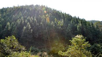 Underutilized forestland is turned into a Chinese fir forest in Yudu county in Jiangxi province. Photo credit: Jiangxi Provincial Project Management Office.