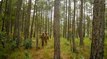 Villagers from the K'ho ethnic minority patrol a pine forest in Viet Nam. Photo credit: ADB.