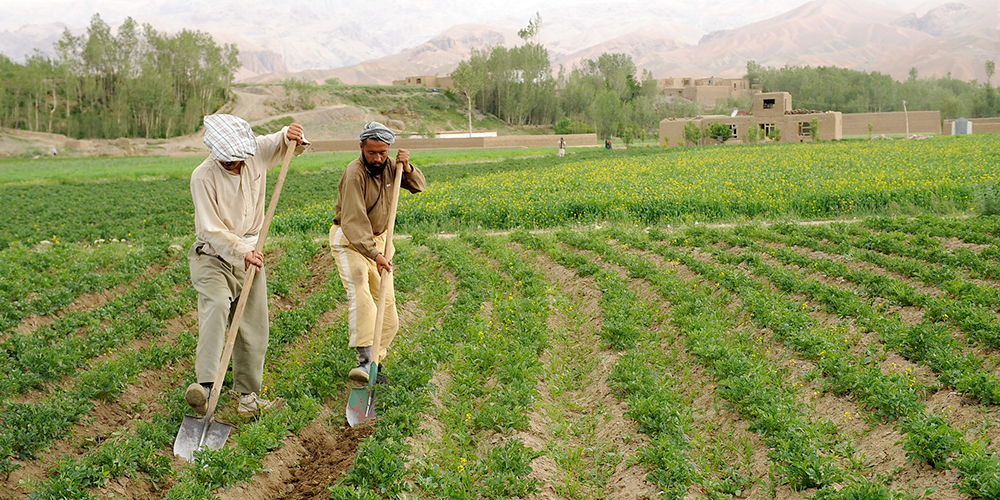 Agriculture is a source of livelihood and income for many people in Central Asia where about 45% of the total population are employed in the sector. Photo credit: ADB